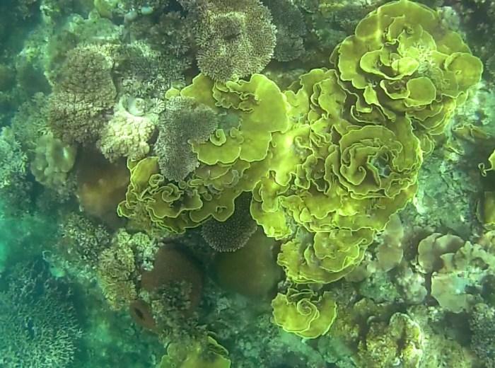 Coraux Selat Nasik Belitung Indonesie
