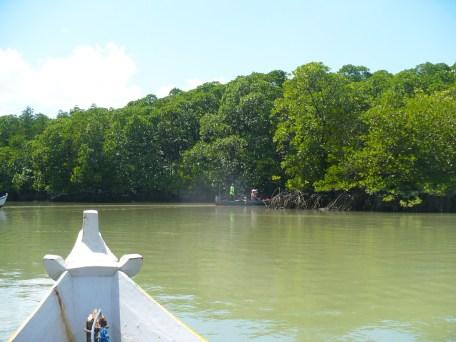 Mangrove GoBelitung Belitung Indonesia
