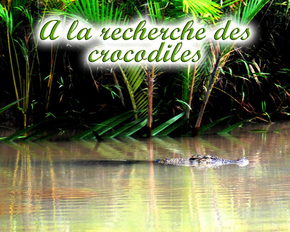 crocodiles-GoBelitung Belitung Indonesia