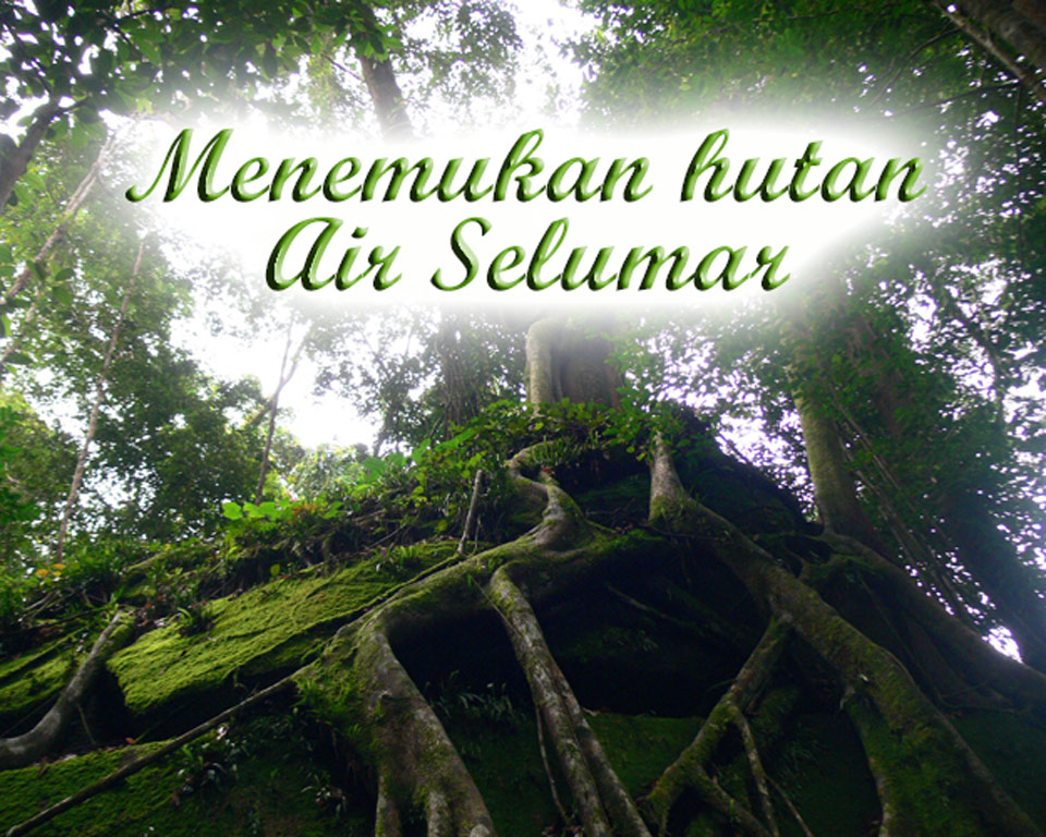 Menemukan-hutan Air Selumar GoBelitung Belitung Indonesia