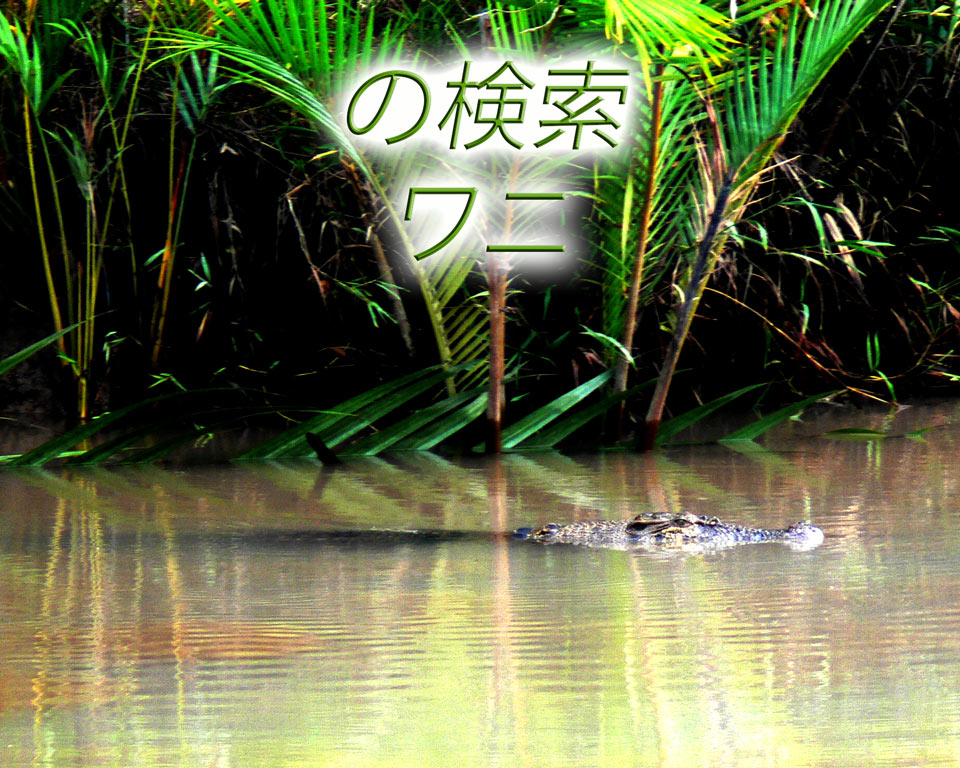 crocodiles jp GoBelitung Belitung Indonesia