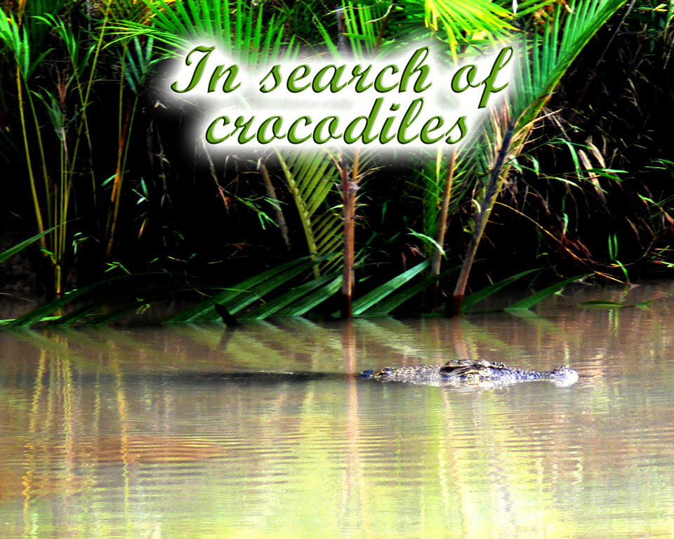 In-search-of crocodiles GoBelitung Belitung Indonesia