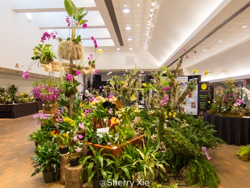 Southern Ontario Orchid Show 2018