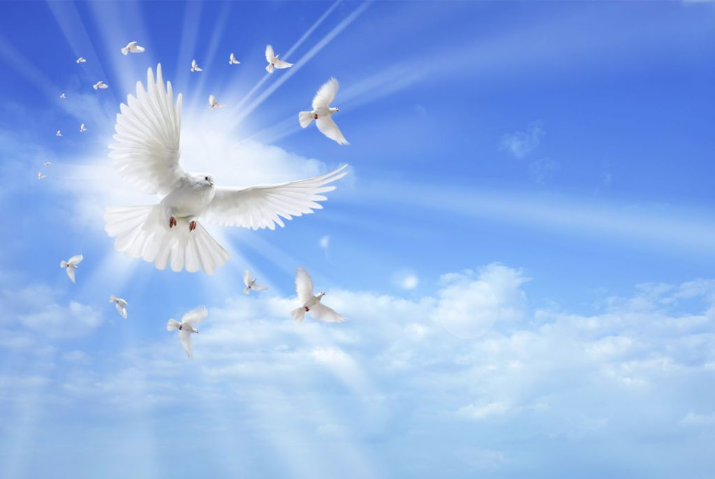 White beautiful pigeon