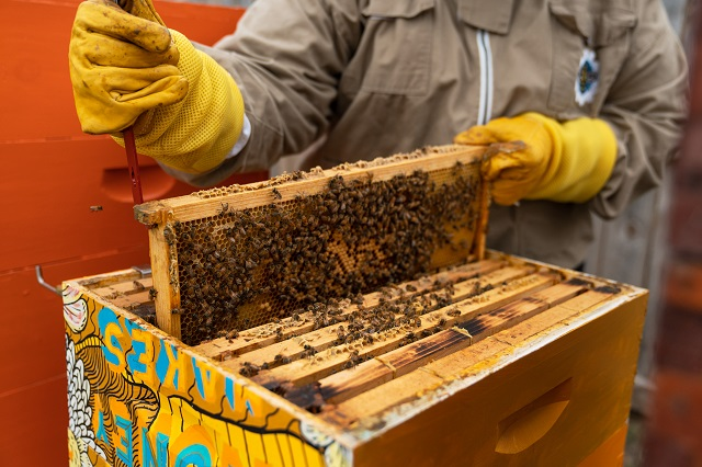 Showing a section of a beehive covered with bees