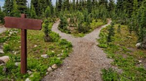 Path diverging in a forest