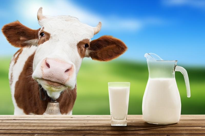 Image result for dairy