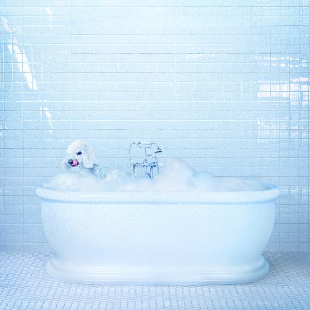 Frankie Cosmos – Vessel (Sub Pop)