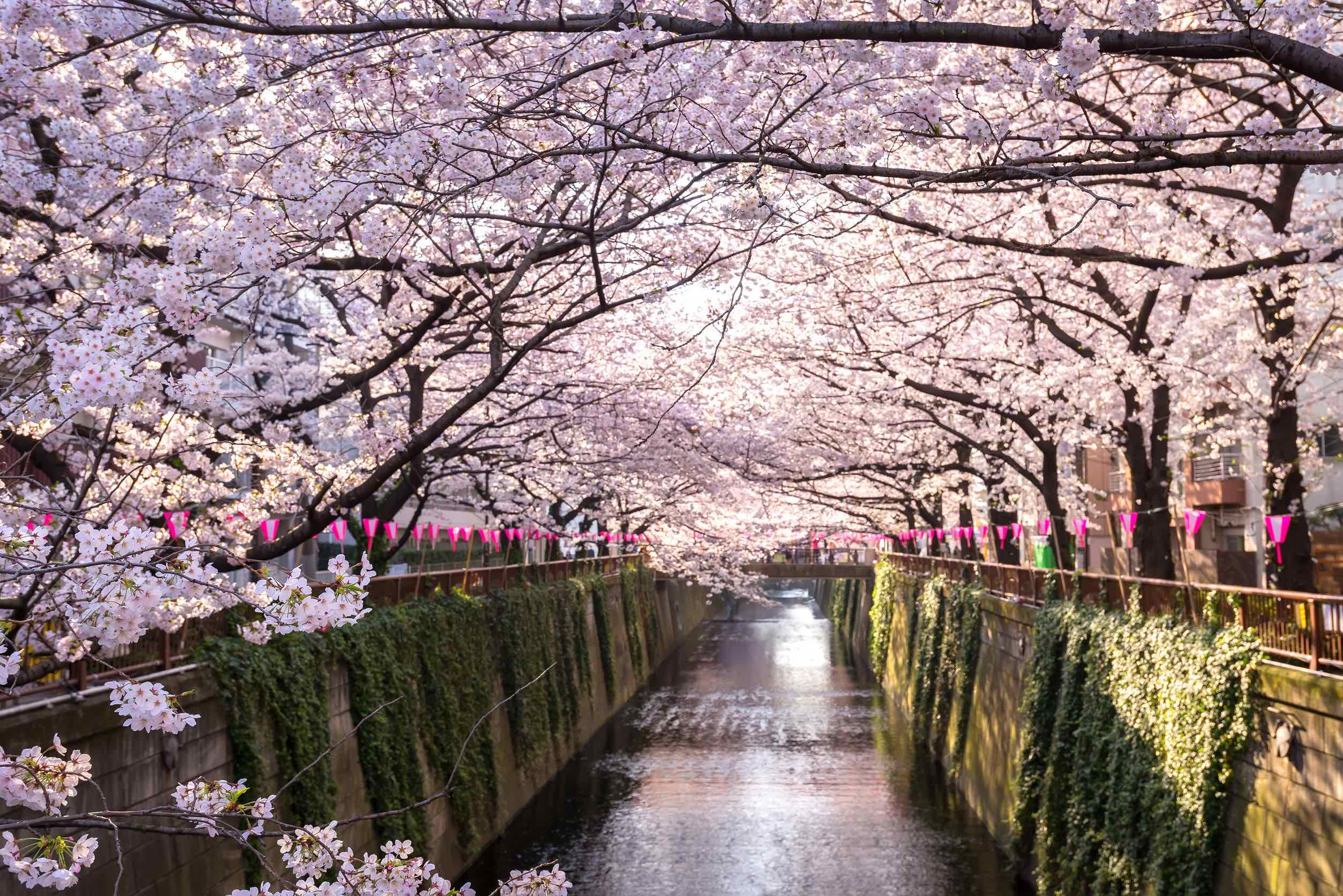 Good News, Japan Still Plans To Welcome Visitors For 2021 Olympics