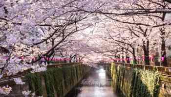 Tokyo At Meguro Canal