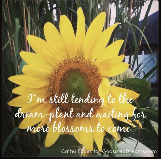 sunflower-final