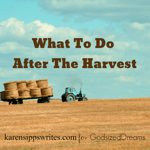 what to do after the harvest