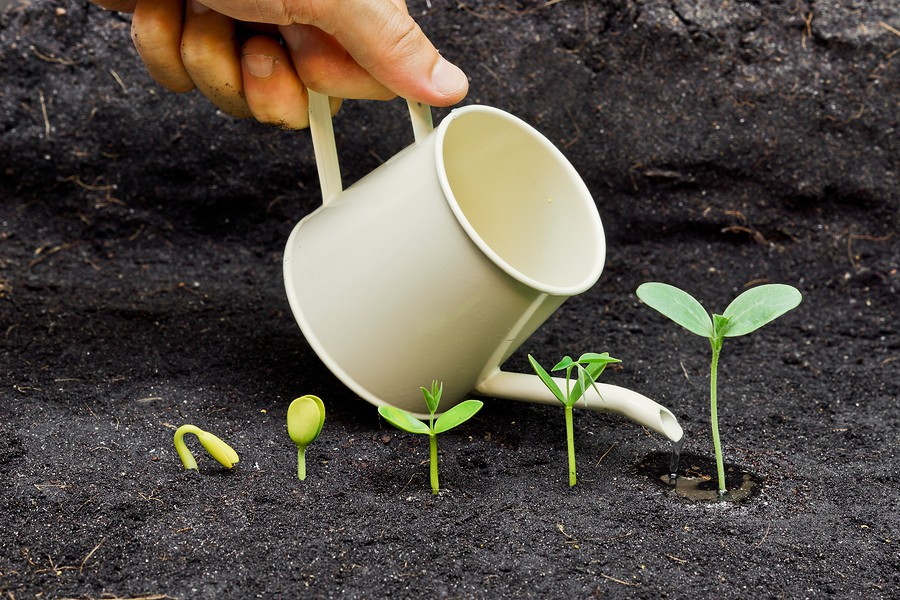 watering-plants-75957932-900x600