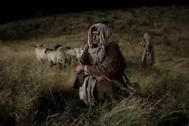 shepherd watching sheep