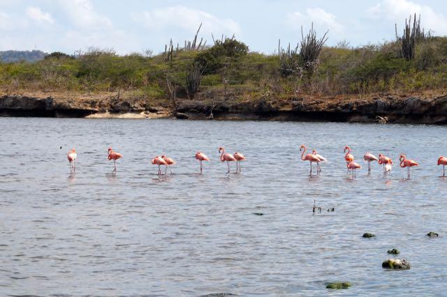 Flamingos at Washington Slagbaai National Park