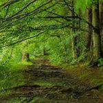 Klimawandel : Der Wald der Zukunft