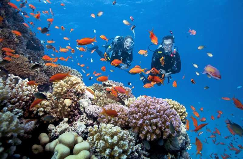Scuba diving to watch the coral