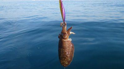 pesca-de-sepias-a-eging-678x381