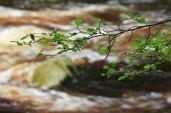 Vydra river