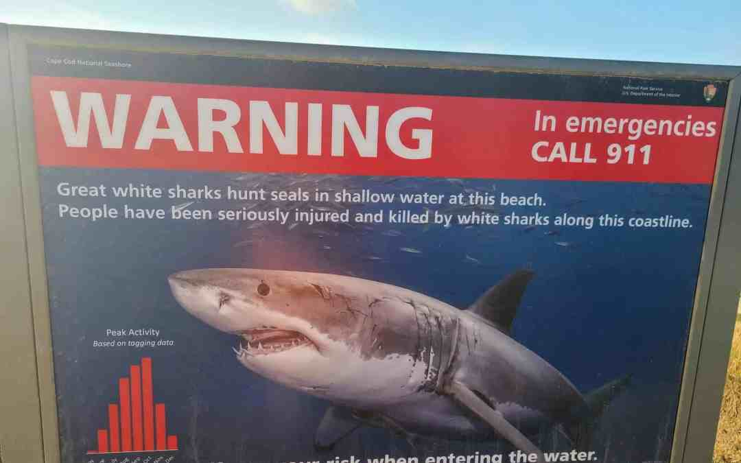 Here is an Article that shows where Shark Attacks happen most in the US
