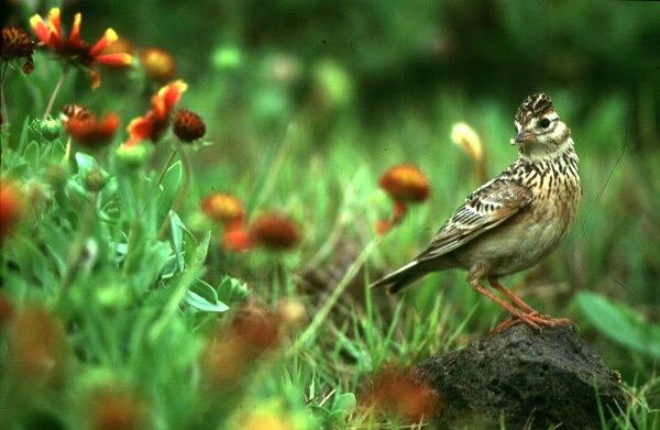 林凱逸1999野鳥攝影展