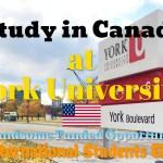 York University Scholarships