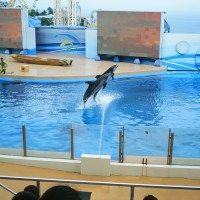 Dolphins at Ocean Park