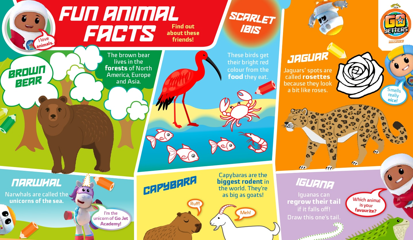 Fun Animal Facts Sheet Go Jetters