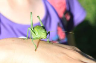 8 – pitomi skakavac i mazna žabica sa Kleka