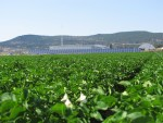 A look at the Gold Dust packing shed solar panels from a potato field
