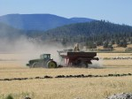 A grain cart being filled with organic wheat on the Running Y Ranch.