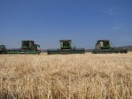 Three John Deere harvesters leased from Machinery Link in a cut grain field on the Running Y Ranch.