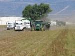 Two potato harvesters and spud trucks harvesting a potato field near the Oregon California border.