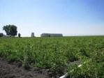 The Stonghold Field near Tulelake, California, before potato harvest.