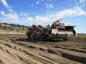 A potato bulker in a Malin, Oregon field near Gold Dust's campus.