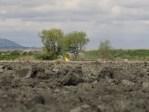 A John Deere tractor prepares an organic wheat field on Lower Klamath on the Oregon California border.
