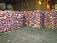 Pallets of 50 pound sacks of chipping potatoes ready to be loaded into trucks in Gold Dust Potatoes' packing shed.