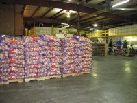 Workers load pallets with 50 pound sacks of chipping potatoes in Gold Dust Potato Processors' packing shed.