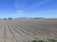 A prepped field near the Panhandle outside of Tulelake, CA is prepared to be planted with chipping potatoes.