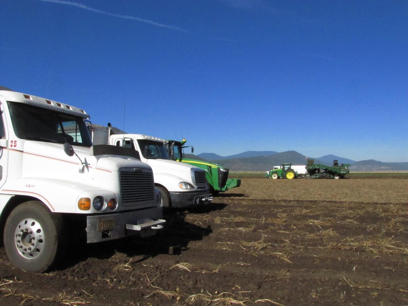 Potato Harvestgolddustfarms Com