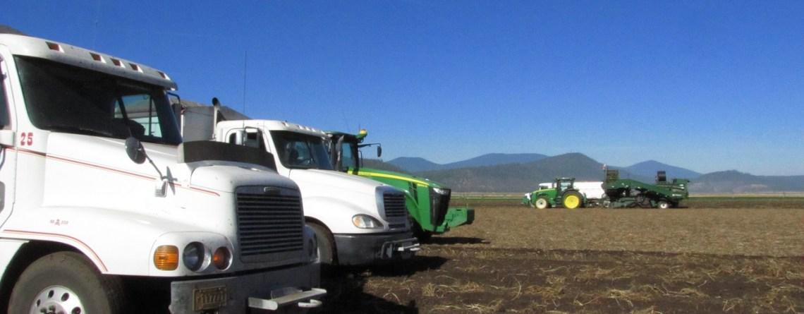 Potato Harvest Ends