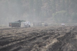 Two bulkers load potato trucks in a chipping potato field at the Running Y Ranch, Klamath Falls, OR.