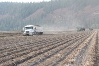 A semi-truck hauling a trailer load of chipping potatoes from the Running Y Ranch.