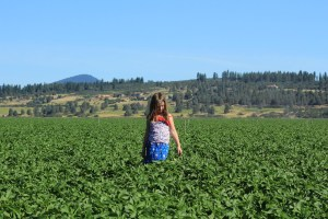 Tricia Hill's daughter, Mari, walks through a potato field farmed by her family near the Running Y Ranch.
