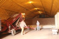 Two employees pile chipping potato seed into a cellar at Gold Dust Potato Processors' Malin, Oregon campus.