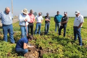 Ryan Burge inspects 2126 chipping potatoes grown by Luke Robison in a field near Malin, Oregon.