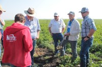 Weston Walker, of Gold Dust and Walker Farms, and Ryan Burge, of Kettle Brand potato chips, inspecting organic Lamoka chipping potatoes while Matt and Drew Huffman watch.