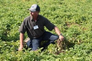 Rob Unruh, fourth generation Klamath Basin farmer, digging up Dakota Pearl chipping potatoes in a field near Malin, Oregon.
