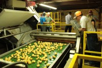 Chance McAuliffe watching chipping potatoes being sorted by the Odenberg optical sorter during the 2017 Open House Field Day.
