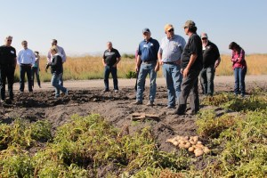 Matt Huffman, John Walker and Danny Lopez talking about chipping potatoes in a field on the Tule Lake Leaselands.